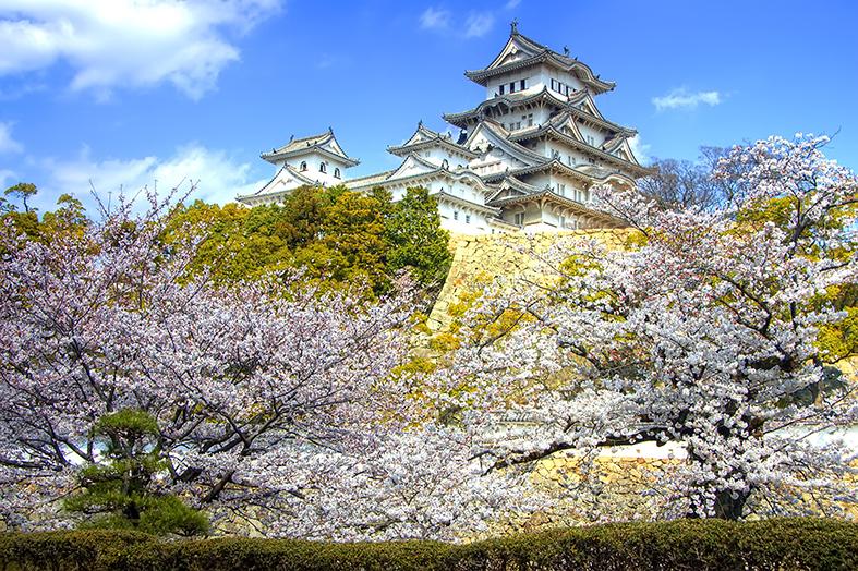 Esgar Viajes - Floración de los cerezos en Tokio